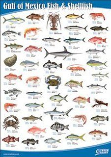 Images freshwater fish fresh water fish species what for Mexican gulf fishing company