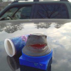 Geocaching - beware of sharks!