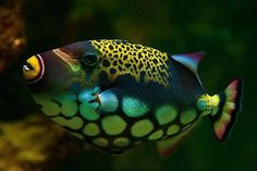 Underwater Fish, Underwater Creatures, Ocean Creatures, Underwater World, Colorful Fish, Tropical Fish, Life Under The Sea, Beautiful Sea Creatures, Beneath The Sea