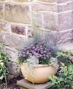 Dr. Dan's Garden Tips: Perennials in a Pot
