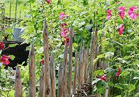 Den Gartenzaun bunt bepflanzen