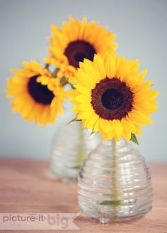 Sunflowers in glass vases www.picture-it-big.co.uk #sunflowers #flowerphotography Available to buy on Etsy https://www.etsy.com/uk/listing/194801613/sunflowers-in-glass-vases-photographic?ref=listing-shop-header-2
