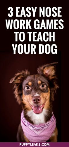 Looking for an easy way to keep your dog busy and mentally stimulated? Here's how to get started with scent work by teaching your dog some basic nose work. 3 easy nose work games to teach your dog. #dogs #dogtips #dogcare #doggames #dogexercise