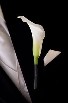 White Mini Calla Lily Boutonniere wrapped with Tiffany Blue Satin Ribbon for Groom