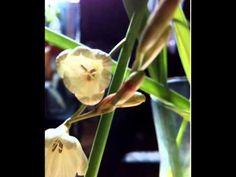 Flores ;)))...