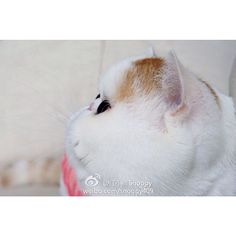 What did snoopy see? Cats Of Instagram, Instagram Posts, Balls, Snoopy, Fur, Photos, Animals, Animais, Animales
