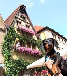 """""""Well, Germany has been amazing, beautiful, and fascinating! But don't forget, there are still many more pictures & stories from my trip that I'm saving for my book! Subscribe here to get updates on..."""
