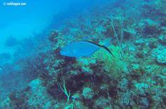 c0146c4f929 14 Best Snorkeling on St. John