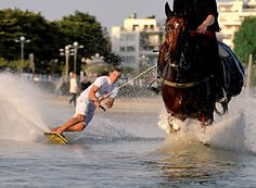 Horse surfing! This is now on my bucket list!