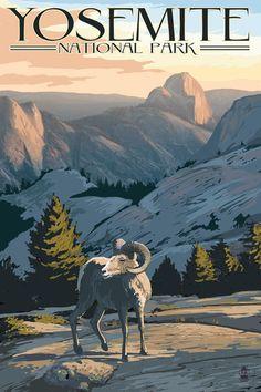 Yosemite National Park, California - Big Horn Sheep - Lantern Press Artwork