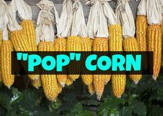 Painfully Corny Jokes That Are So Bad Theyre Actually Good - 21 jokes awful theyre actually funny