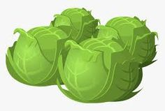 Schedule Testing! Sprouts, Schedule, Timeline, Brussels Sprouts, Cabbages