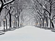 Central Park in Winter Art Print at AllPosters.com