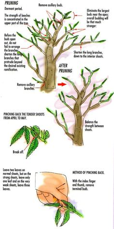 Pruning and Caring for your bonsai