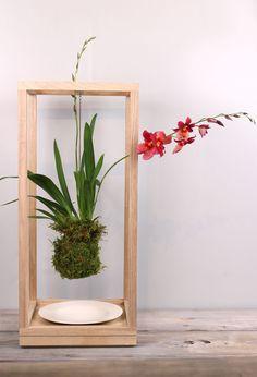 Plant Bondage- Ash wood, porcelain - Light + Ladder