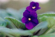 As 22 melhores plantas para ter em casa | A Nossa Vida