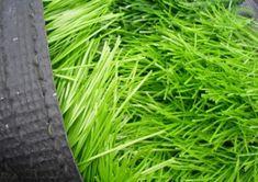 Compare Prices on Artificial Grass Soccer Field- Online Shopping . Grass, Herbs, Online Shopping, Soccer, Futbol, Net Shopping, Grasses, European Football, Herb