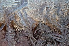 Rhapsody in Frost | Copyright © 2011 Elizabeth Root Blackmer… | Flickr