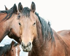 Rugged Country Horse Photo Horse Photography by ApplesAndOats, $25.00