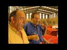 Video 2 La tomatina docromentary