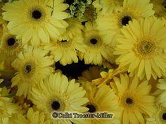 Yellow Gerbera Daisies #theflowershopfairoaks