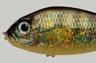 Boyd Webb, 3/4 Fish, 2014, giclee print on Innova Fibaprint Semi-Matte 300gsm, 1045 x 1470 mm