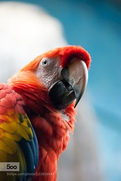 The parrot by comanalexandraannamaria. Please Like http://fb.me/go4photos and Follow @go4fotos Thank You. :-)