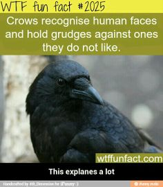 Crow is the left-handed guardian. Crow knows the unknowable mysteries of creation and is the keeper of all sacred law. There are several species of crow. Raven is one of these and magpies are another. Crow medicine people are masters of illusion. Wtf Fun Facts, True Facts, Funny Facts, Random Facts, The More You Know, Did You Know, What The Fact, Animal Facts, Things To Know