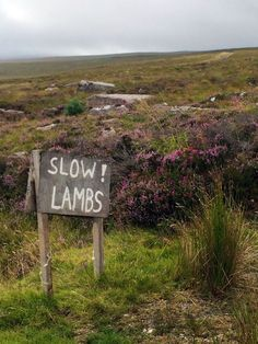 New road signs were posted, to ensure the safety of the wee lambs sneaking off to school.