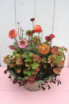 Iris Garden, Balcony Garden, Watercolor Flowers, Container Gardening, Flower Arrangements, Garden Design, Flora, Landscape, Antiques
