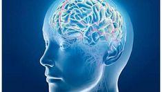Bacalao con Papa: La neuroimagen puede predecir el Alzheimer con 15 ...