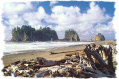 First Beach, Washington