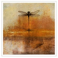 Mixed Media: Transfers, Plaster, Encaustic Wax, handmade paper, earth and oil pigments