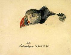 Peters Udsigt: Akvarelmaleriets mysterier (22) - Fritz Syberg, Johannes Larsen - og egne fugle- og Kreta-drømmerier