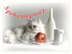 Wierszyki i gify na dobranoc: Gify na dobranoc kotki Animals, Gatos, Dog Love, Animales, Animaux, Animal, Animais