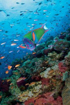 Vibrant underwater life | underwater | underwater art | interior design | modern art | modern | beautiful | #metalwallart #interiordesign https://www.statements2000.com/