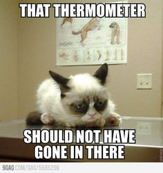 Grumpy cat goes to the vets.