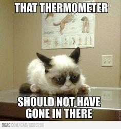 Grumpy cat goes to the vet