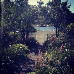 IMG_3305 Vineyard, Plants, Outdoor, Summer, Outdoors, Vine Yard, Vineyard Vines, Plant, Outdoor Games