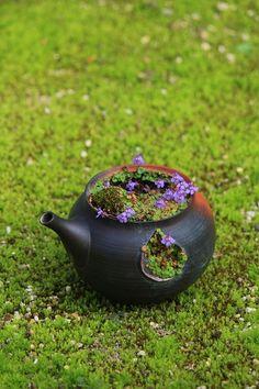雪柳の豆盆栽 の画像|チョコレート盆々