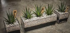 The Juicy Leaf, a boutique store in Venice Beach, CA creates unique designer terrariums and succulent arrangements. We also specialize in manzanita sculpture, h