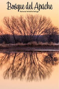 The Bosque del Apache National Wildlife Refuge is one of the many hidden gems in the National Park portfolio and its an easy drive from Las  Cruces. Things to do in New Mexico (USA). Things to do while staying in  Las Cruces.