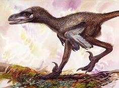 Various deinonychosaurs by Peter Schouten | Bambiraptor