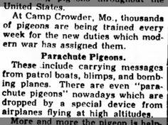 Homing Pigeons assist troops 25 Jun 1943