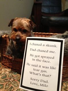 """""""I chased a skunk. - Dad Chased me. - Dad got sprayed in the face. - Dog Shaming - got dad sprayed in his face. - He said it was like tear gas... what is that? - Sorry Dad! - Love Milo"""" ~ Dog Shaming shame"""