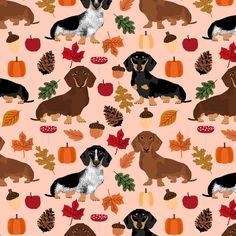 dachshund dog doxie pumpkin autumn leaves leaf pinecones acorns dog breed fabric fabric by petfriendly on Spoonflower - custom fabric Dapple Dachshund, Dachshund Art, Long Haired Dachshund, Dachshund Puppies, Weenie Dogs, Dachshund Drawing, Dachshund Tattoo, Dachshund Clothes, Dachshund Gifts