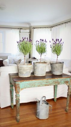 Lavender topiaries, sap buckets, chippy console table. Farmhouse love.