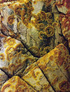lichen on rocks by Eliot Porter