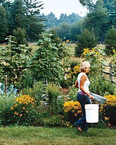 Tener un jardín orgánico, se refiere a la forma de manejo y control del mismo, en este caso es natural. Se trata de darles a las plantas las mejores condiciones para fortalecer sus defensas y hacerlas más resistentes.