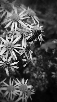 Beautiful flowers. Raebattesonart